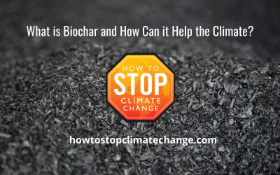 What is Biochar and How Can it Help the Climate?